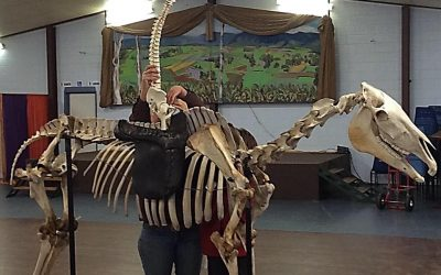 The fascination of bones -part 1.